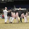 Royal16_Holstein_L32A4405