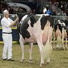 Royal16_Holstein_L32A4473