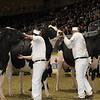 Royal16_Holstein_1M9A0678