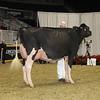 Royal16_Holstein_1M9A0599