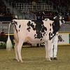 Royal16_Holstein_1M9A0582