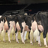 Royal16_Holstein_1M9A0713