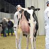 Royal16_Holstein_L32A4235