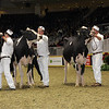 Royal16_Holstein_1M9A0683