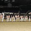 Royal16_Holstein_L32A4220