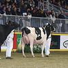 Royal16_Holstein_L32A4212
