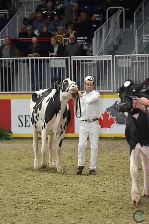Royal16_Holstein_L32A4361