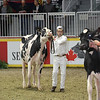 Royal16_Holstein_L32A4361