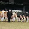 Royal16_Holstein_L32A4348