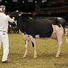 Royal16_Holstein_1M9A0633