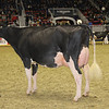 Royal16_Holstein_1M9A0595