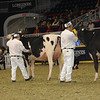 Royal16_Holstein_1M9A0445