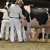 Royal16_Holstein_1M9A0798