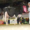 Royal16_Holstein_L32A4391