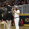 Royal16_Holstein_L32A4215