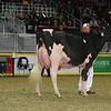 Royal16_Holstein_L32A4459