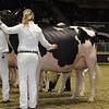 Royal16_Holstein_1M9A0793