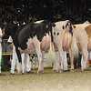 Royal16_Holstein_1M9A0515