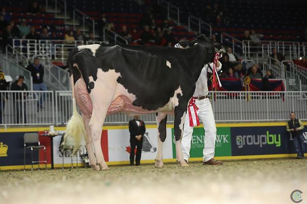 Royal16_Holstein_L32A4455