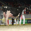 Royal16_Holstein_L32A4455