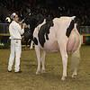 Royal16_Holstein_1M9A0755