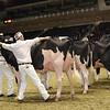 Royal16_Holstein_1M9A0655