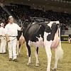Royal16_Holstein_1M9A0381