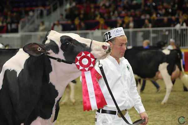 Royal16_Holstein_L32A4272