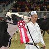 Royal16_Holstein_L32A4272
