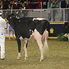 Royal16_Holstein_1M9A0440