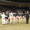 Royal16_Holstein_1M9A0404