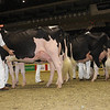 Royal16_Holstein_1M9A0665