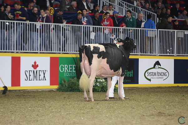 Royal16_Holstein_L32A4478