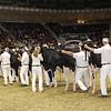Royal16_Holstein_1M9A0654