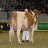 Royal16_Holstein_1M9A0579