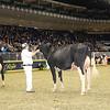 Royal16_Holstein_1M9A0397