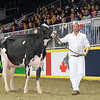 Royal16_Holstein_L32A4419