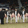 Royal16_Holstein_L32A4263