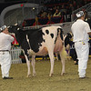 Royal16_Holstein_1M9A0448