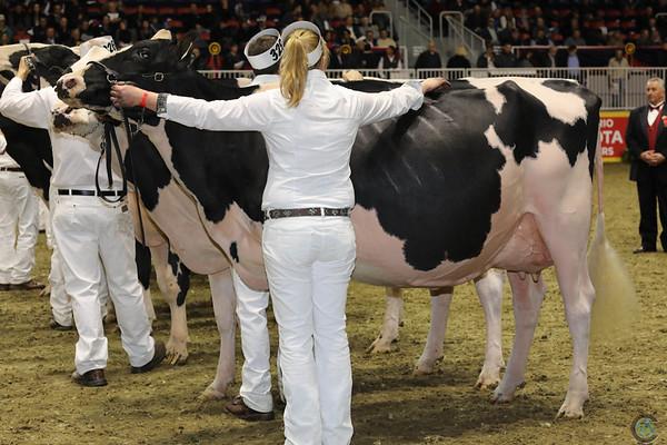 Royal16_Holstein_1M9A0801