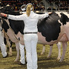 Royal16_Holstein_1M9A0801