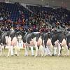 Royal16_Holstein_L32A4431