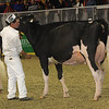 Royal16_Holstein_1M9A0733