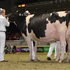 Royal16_Holstein_1M9A0804