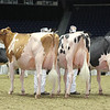 Royal16_Holstein_L32A4315