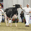 Royal16_Holstein_L32A4414