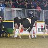 Royal16_Holstein_L32A4188