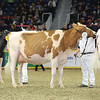 Royal16_Holstein_L32A4384