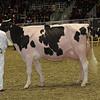 Royal16_Holstein_1M9A0785