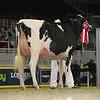 Royal16_Holstein_L32A4286